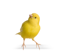 Colorful Companions Canary Feed