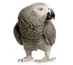 Bird Feed
