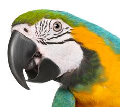 Parrot Breeder