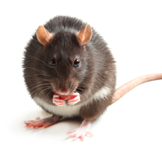 Mazuri Rat and Mouse Diet