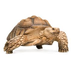 Tortoise Feed