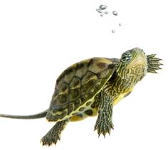 Turtle Diet 5M87