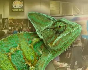 ReptileShowGraphic